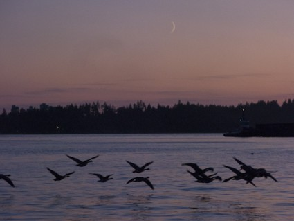 geese & pink syy