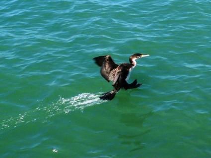 tail landing