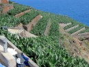 Banana plantations on the terraces in La Palma