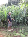 Kolio shows us the pandanas grown for the basket weaving.