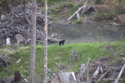 Mother bear on our trail