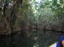 The Indian River is where parts of Pirates of the Caribbean was filmed!.JPG