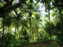 The green , green rainforest of Dominica.JPG
