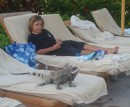 The iguanas will go anywhere they choose
