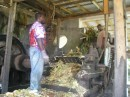 The sugar cane is being crushed for the juice..JPG