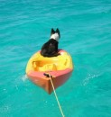 g Daisy loves hanging out on the kayak-she can see everything that is happening.JPG
