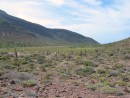 Isla Partida - The landscape here was fantastic! Numerous variety of cacti and lush mangroves made for green hills on the island.