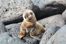 Cute baby sea lion off of San Cristobal. Picture courtesy of Charles Turner.