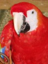 Another parrot picture. This one bit so taking pictures was a bit of a challenge.