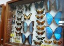 La Ceiba - This butterfly museum had a collection from over 100 countries and row upon row of beautiful butterflies in boxes. They also had some of the most unusual and scary bugs we have ever seen.