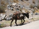 Transportation is via donkey to haul farming equipment and other items from place to place in Colca Canyon.