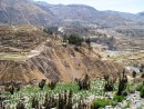 Colca Canyon. Agricultural terraces from pre Incan and Incan time dot the landscape.