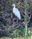 Lots of great birds like this egret.