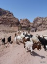 Goats are every in Jordan even in Petra