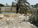 Egypt disappearing under rubbish