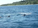 A few of our fortunate friends floating quietly, with the mother & calf  very close.