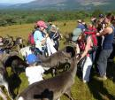 Alison hand-feeding reindeer, Cairngorm Mountains, Scotland