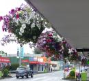 Hanging flower baskets line the main street in Otorohanga