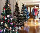 Display of Christmas trees Whangarei