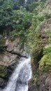 Rain forest water fall