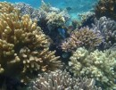 soft coral 5