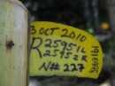 Tags on a turtle nest. This lady laid 191 eggs on Oct 3, 2010