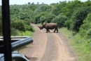 Our first encounter with a rhino.  He appeared out of nowhere as we turned a corner.
