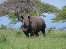 This is the rhino that was thinking about charging us.