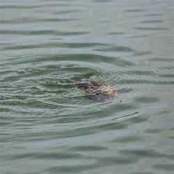 Can you guess what this was swimming by the boat?
