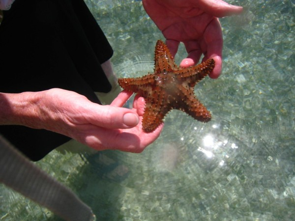 Suz also picked this live sea star up. It was alive so back in it went too.