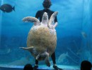 IMG_0508: turtle at the Mazatlan aquarium