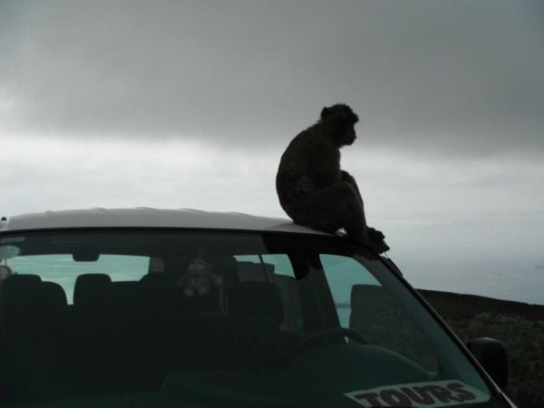 Monkey on the roof of our bus