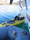 Hilo discovers the kayak and old dingy: Hilo discovers the kayak and old dinghy