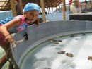 Julianna dreams of raising her very own sea turtles. Here she sees a conservation effort that has kept four species of turtles alive and thriving on the island of Bequia.