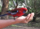 Bird in the hand...