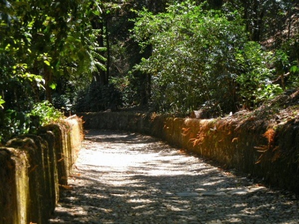 The cobblestone road to the Hacienda.