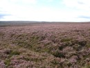 The purple heather clad North York moors
