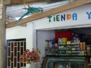 Macaw at the shop near the entrance to the waterfall Quebrada Valencia