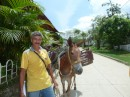 Donkey in Minca