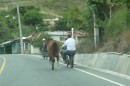 Horse being led by its owner on the motor bike on the Constanza mountain road