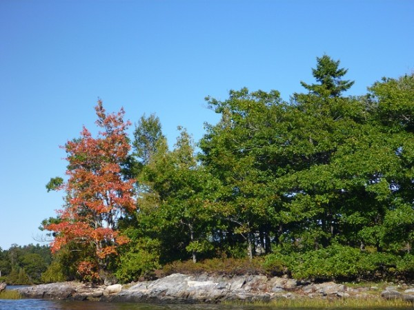 Do you think this means anything now that the trees are turning red??? nr Snow Island, Maine, USA