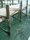 Damage to the walkway from the channel marker which broke free and drifted a mile in Marsh Harbor, Bahamas