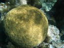 Semms like the brain coral is the healthiest  one around