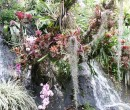 orchids and other bromiliads
