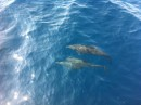 Lots of dolphins along the coast from Panama to Mexico.  Even got some spinners and jumpers.