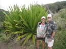 Love the huge plants in Hawaii: Great road trip on Maui from Kahului to Lahaina around the west coast - mainly a one-car road.