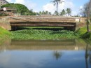 This shows the growth of the water hyacinth under a major bridge in town.