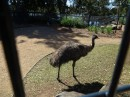 The Alexandria Park in Bundaberg is well worth visiting to see emu, wallabies, lizards, birds and dingos for FREE.