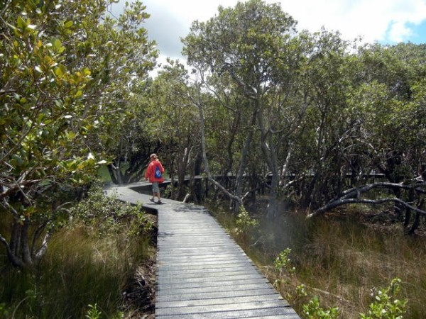 A walk through the mangroves