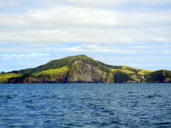 One of the beautiful islands in the Bay of Islands